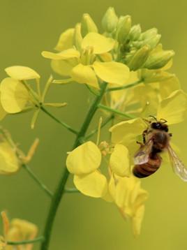 """""""Die Geschichte der Bienen"""" - die kleinen Helden der Welt"""