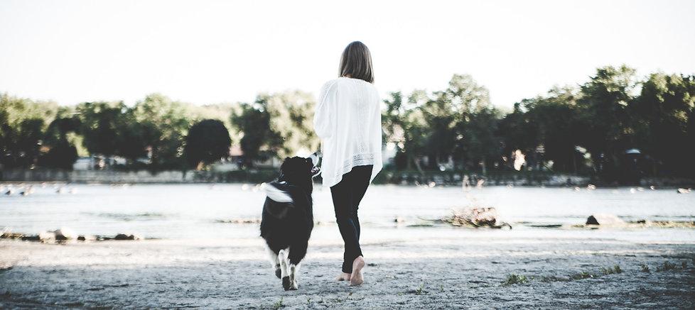 Promenade éducative et garde à domicile pour chiens