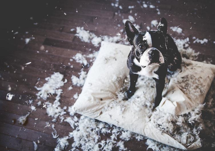 Problème de comportement | Destruction : mon chien détruit tout