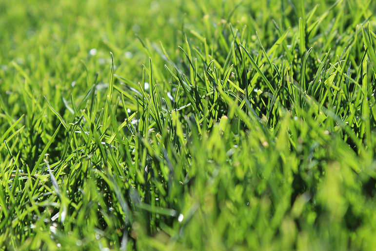 PEM- blades of grass.JPG
