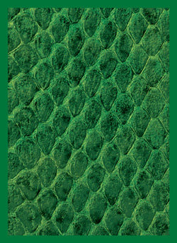 Legion Dragon Hide Art Sleeves Green with Gloss Finish, 50 Pack Standard Size