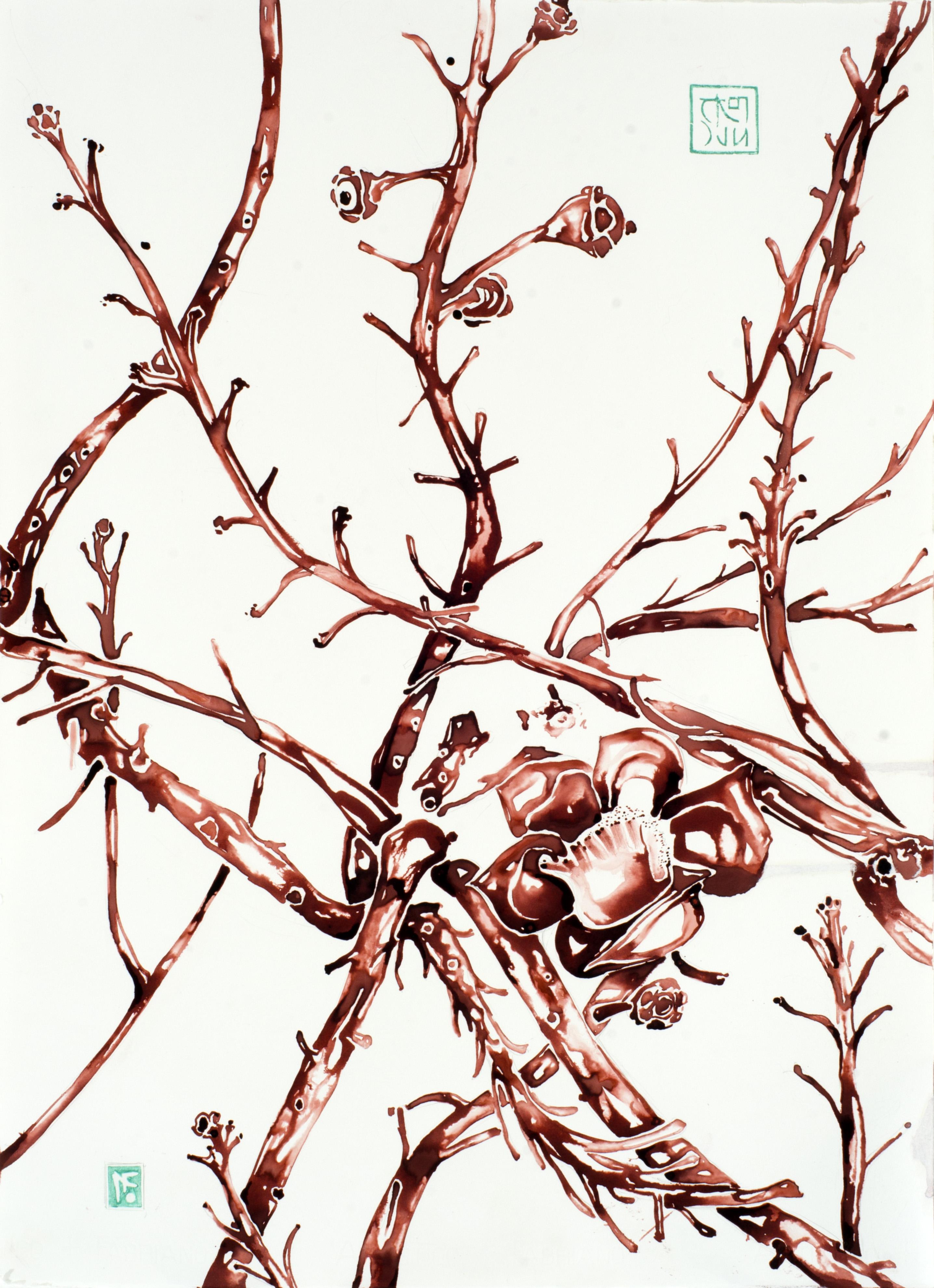botanica.II_56x76cm_aquarela e ecoline sobre papel