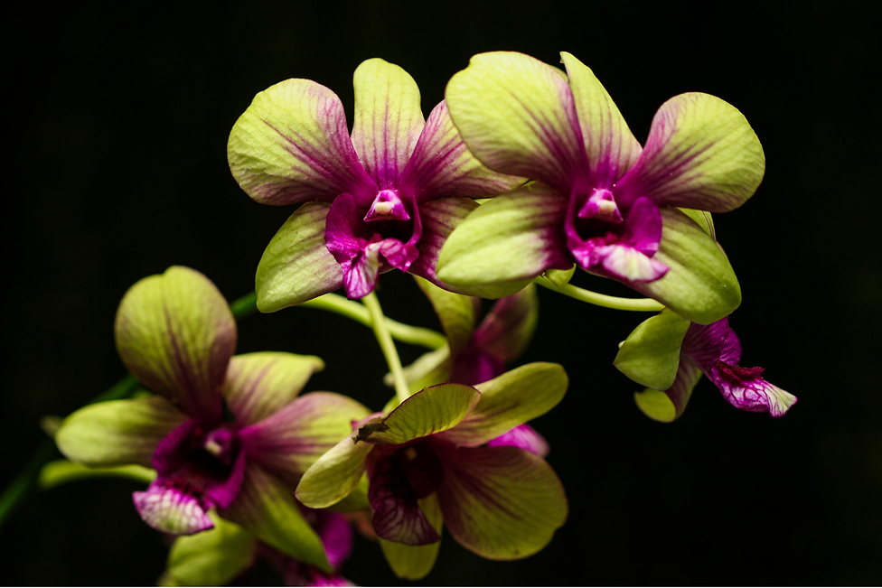 jane orchid.png