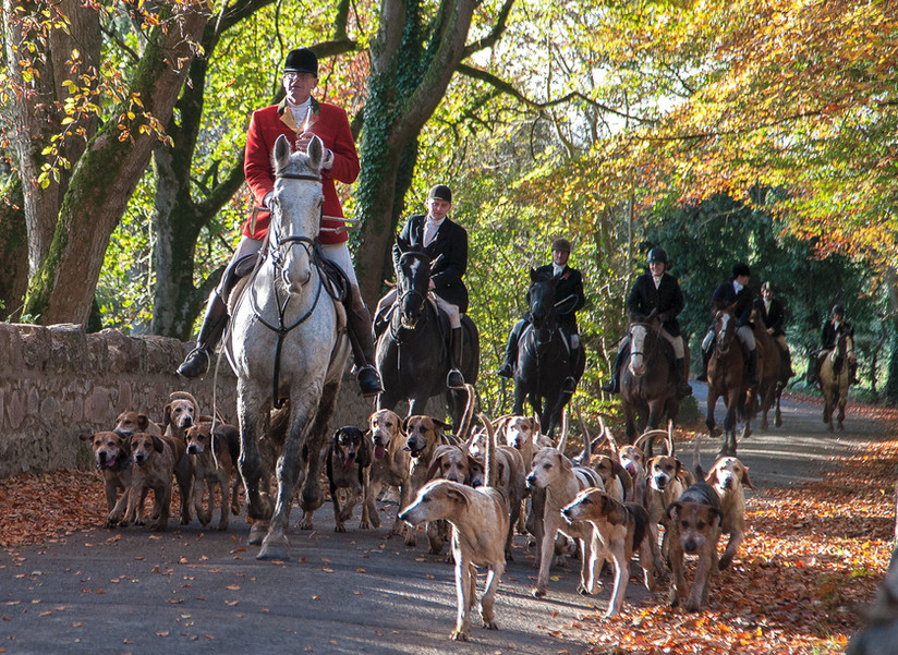 COLOUR -  The Fox Hunt by Martin Spackman (9 marks)