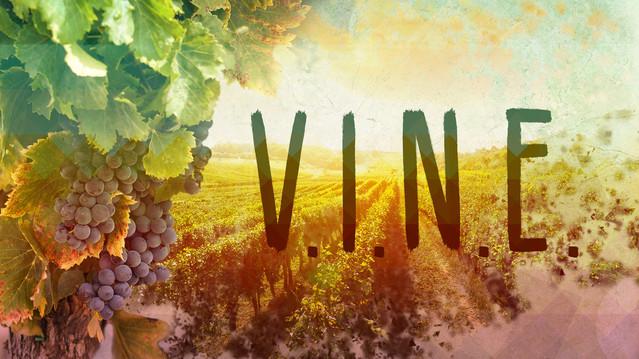 V.I.N.E.