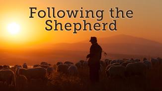 Following the Shepherd.jpg