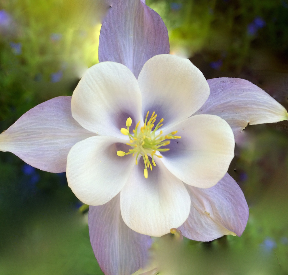 Photograph of Flower by Margaret Greene