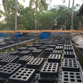Kenya Crab Farm - Che Shale
