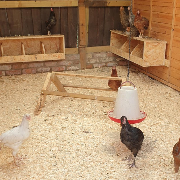 Chickens & Bantams