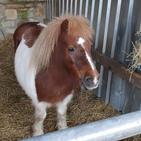 Floss the pony