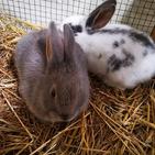 Salt & Pepper the rabbits