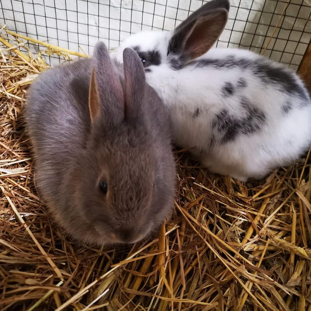 Salt & Pepper the rabbits