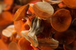 Fungi-4-Detail-e_Web