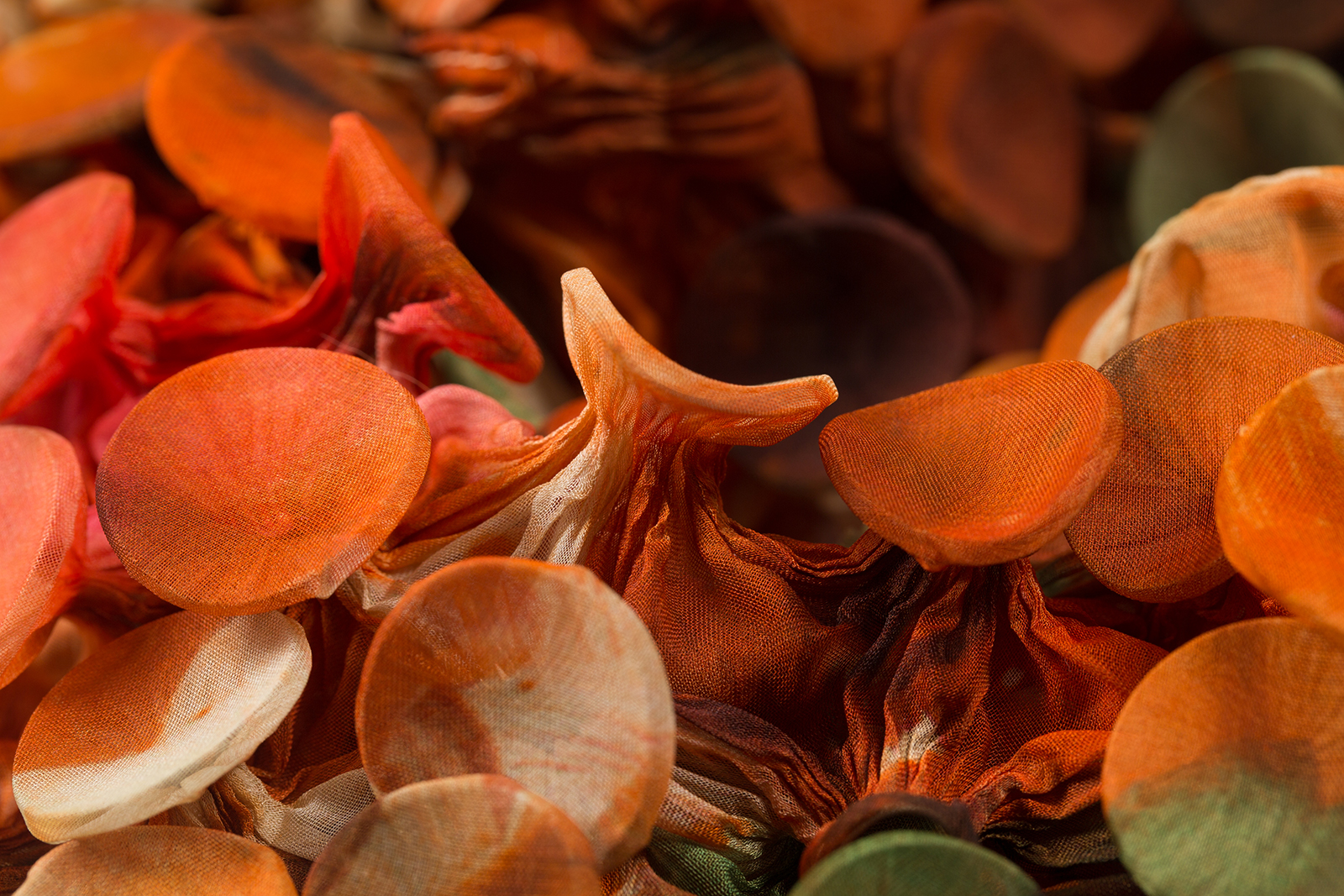 Fungi-4-Detail-c_Web