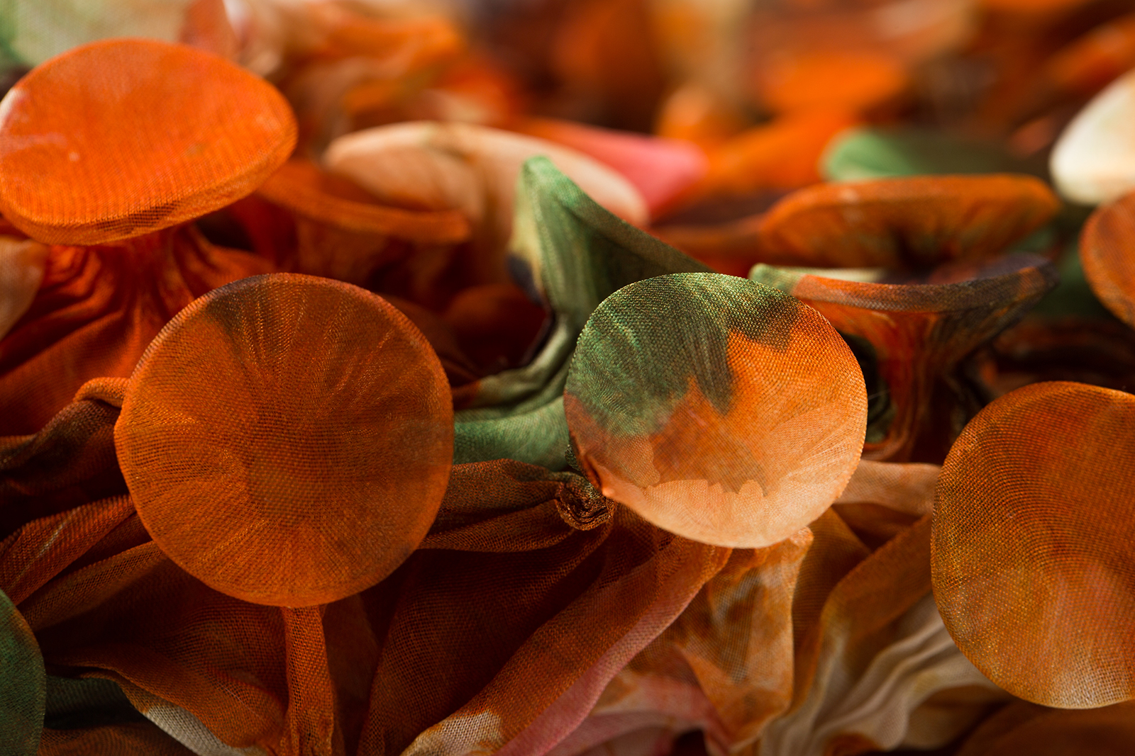 Fungi-4-Detail-a_Web