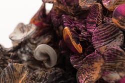 Fungi-12-Detail-f_Web