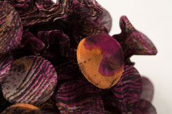 Fungi-12-Detail-b_Web