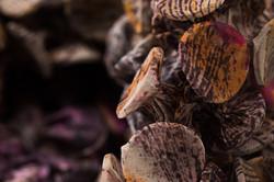 Fungi-12-Detail-d_Web