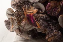 Fungi-12-Detail-g_Web