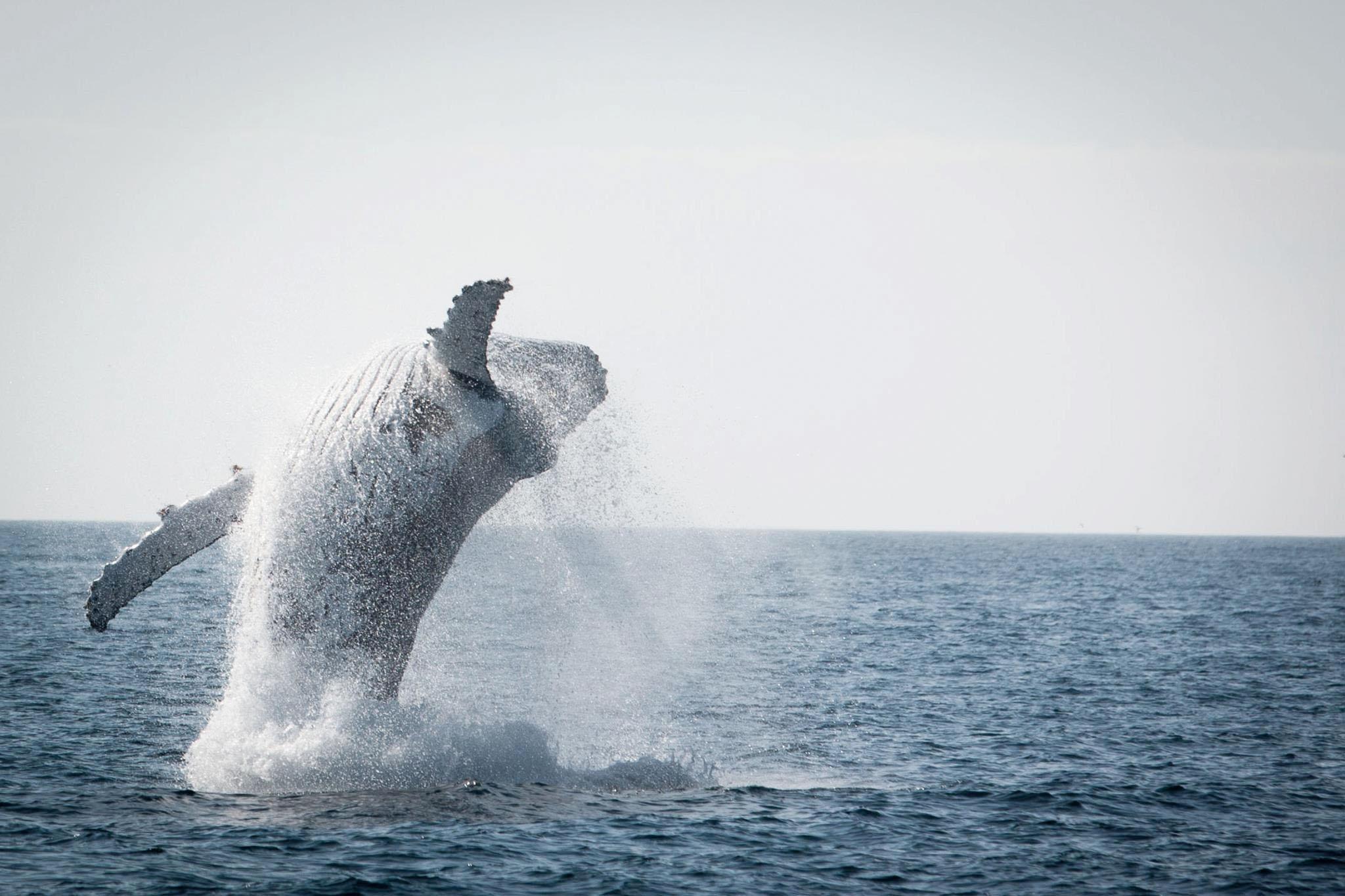 baleine 1.jpg