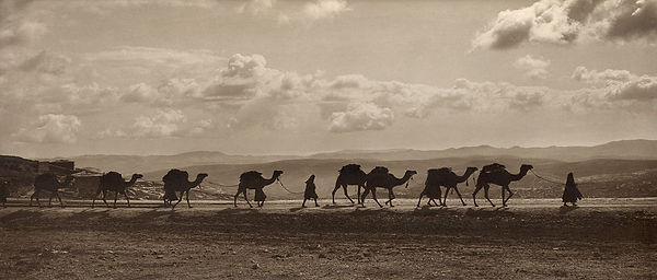 Egyptian camel transport passing over Olivet 1918