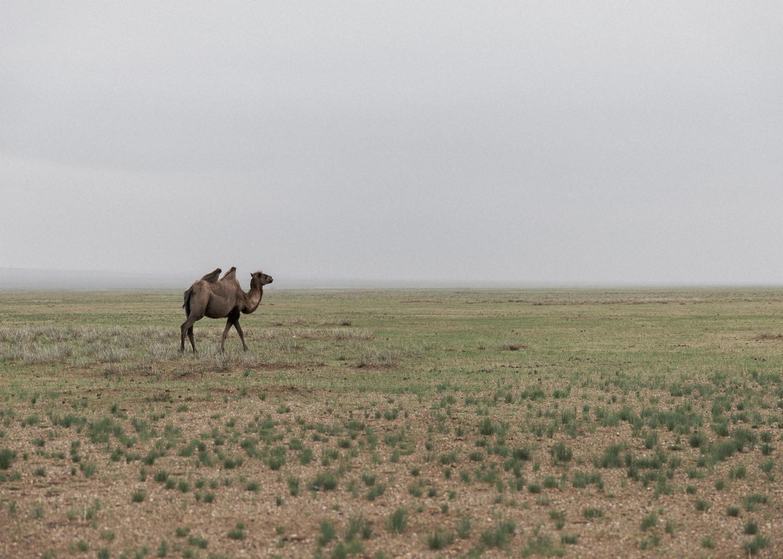 gobi desert 10