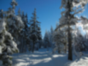 winter ski trail.JPG