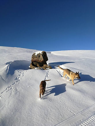 dogs in snow (1).jpg