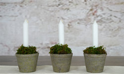 Candles in moss