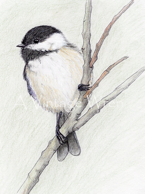 Black-capped Chickadee Print with Double Mat / Bird Art