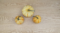 Gourds on Red Oak