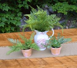 Ferns in transferware and terracotta pots