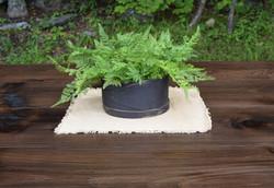 Black Shaker Box with Ferns