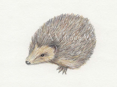 Hedgehog print with Double Mat / Hedgehog art / Hedgehog painting