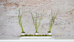 Porcelain Egg Cups and Greenery