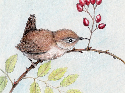 Carolina Wren with Rose Hips Print with Double Mat