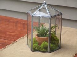Glass terrairum with fern and moss
