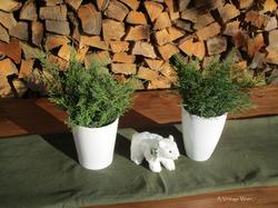 Polar bear and Christmas greens