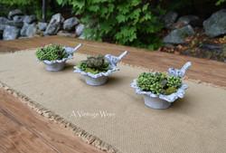 Cast Iron Bird Dish with Succulents