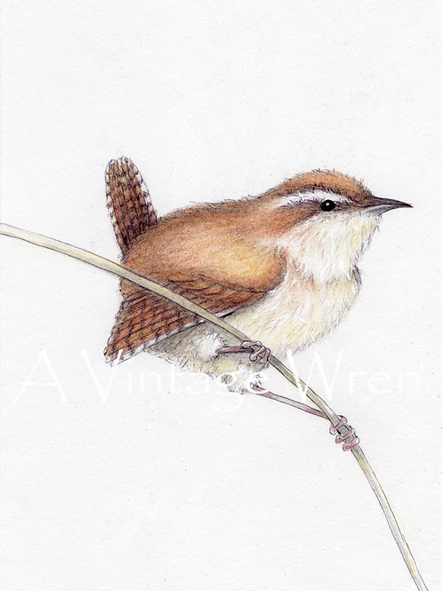 Carolina Wren on Branch with Double Mat