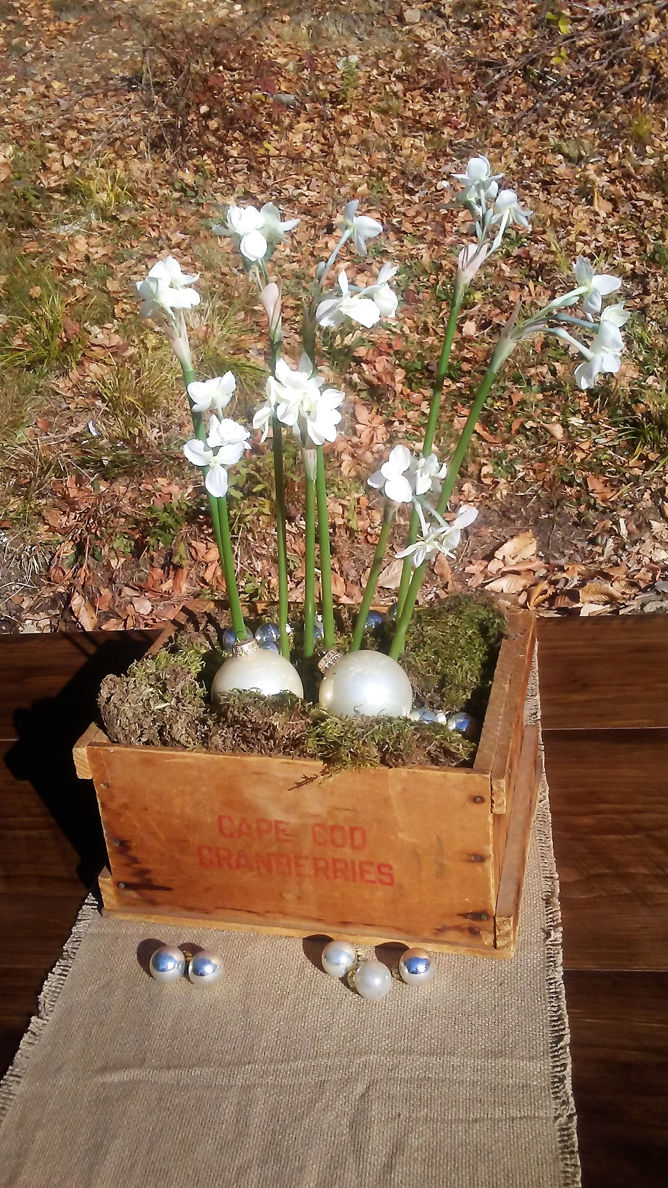 Paperwhites in vintage crate