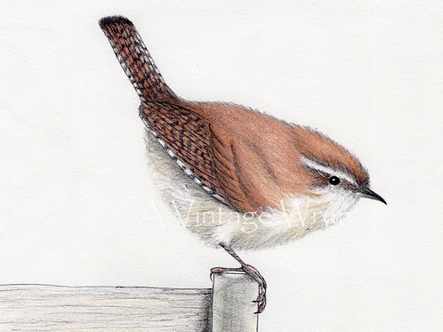 Carolina Wren on Weathered Fence Post Print with Double Mat/ Jenny Wren Art