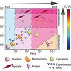 mechanical state diagram of mammalian cy