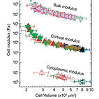cell mechanics depends on cell volume.jp