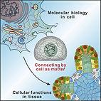 cell as matter.jpg