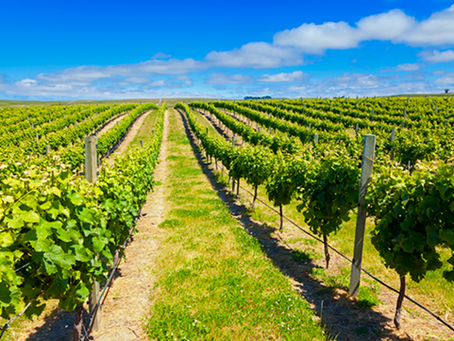 5 wines worth flying for