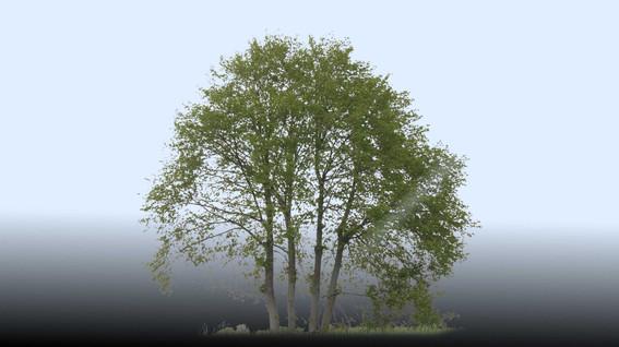 Plants_00088.jpg
