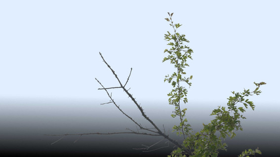 Plants_00059.jpg