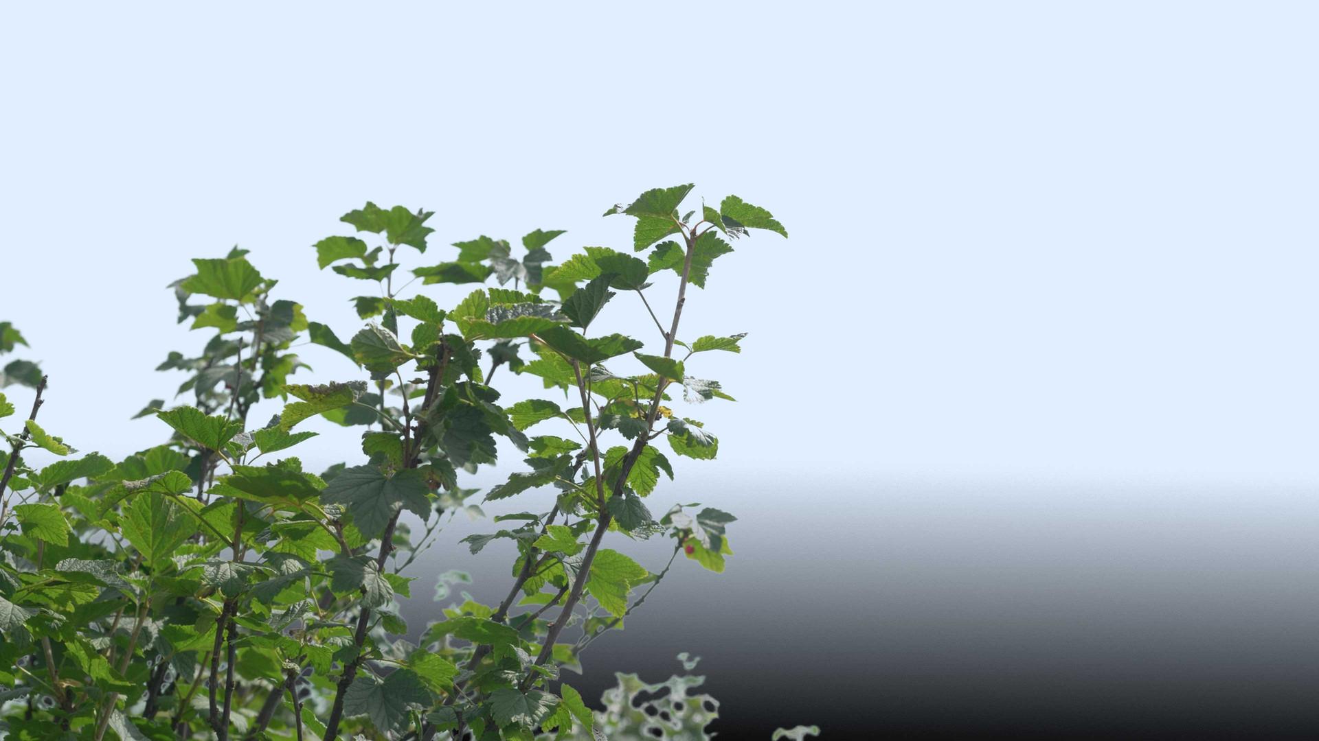 Plants_00063.jpg