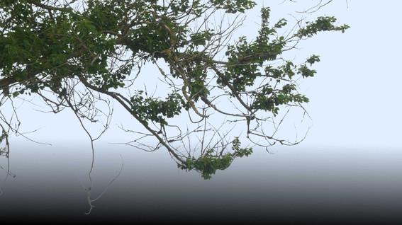 Plants_00060.jpg